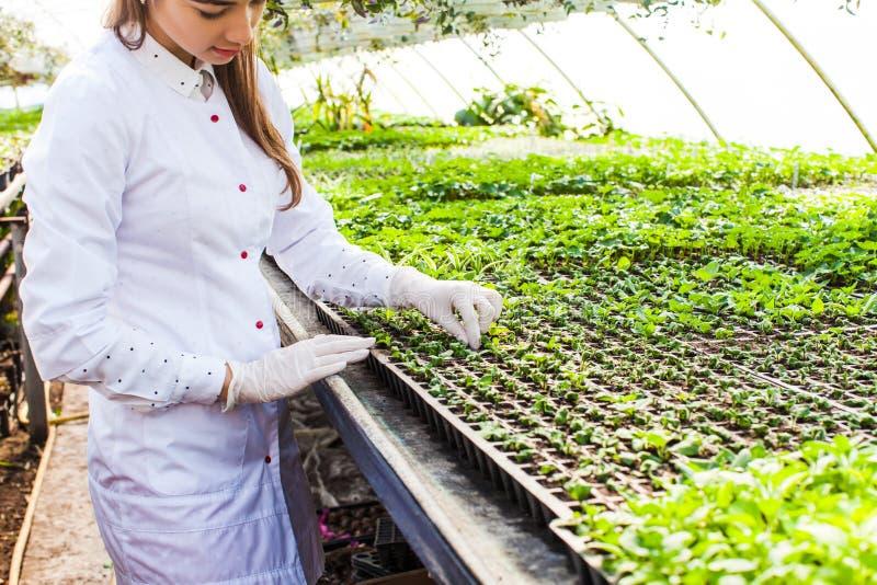 Reseacher da mulher com plantas imagem de stock royalty free