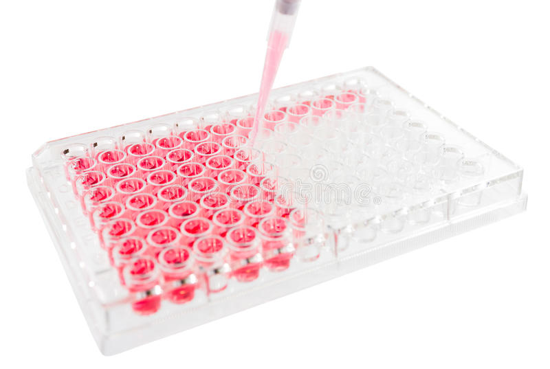 Research test lab elisa plat. E analysis royalty free stock photography