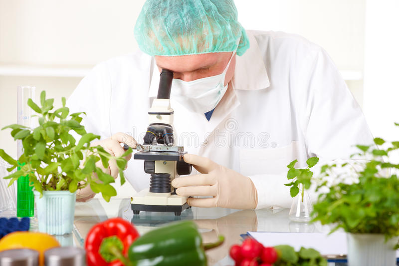 Researcher with microscope with a GMO vegetables royalty free stock photography