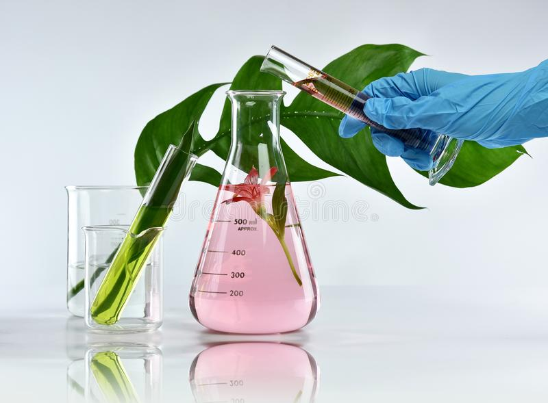 Researcher mixing organic natural extraction, Pharmacist formulating skincare cosmetics from flower plant essence. Alternative medicine, Research and royalty free stock photos