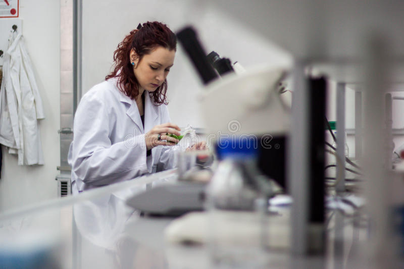 Researcher or scientist or doctoral student pours red and green stock photography