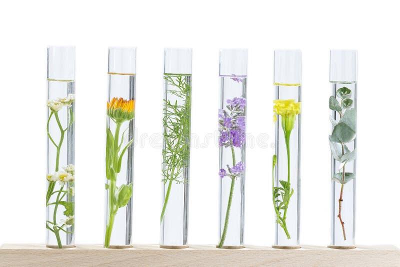 ResearchPants de phytothérapie dans des tubes à essai photo libre de droits