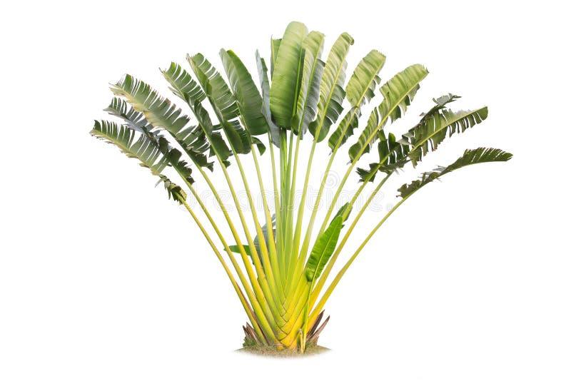 Resenärens palmträd isolerat på vit bakgrund, B arkivfoto