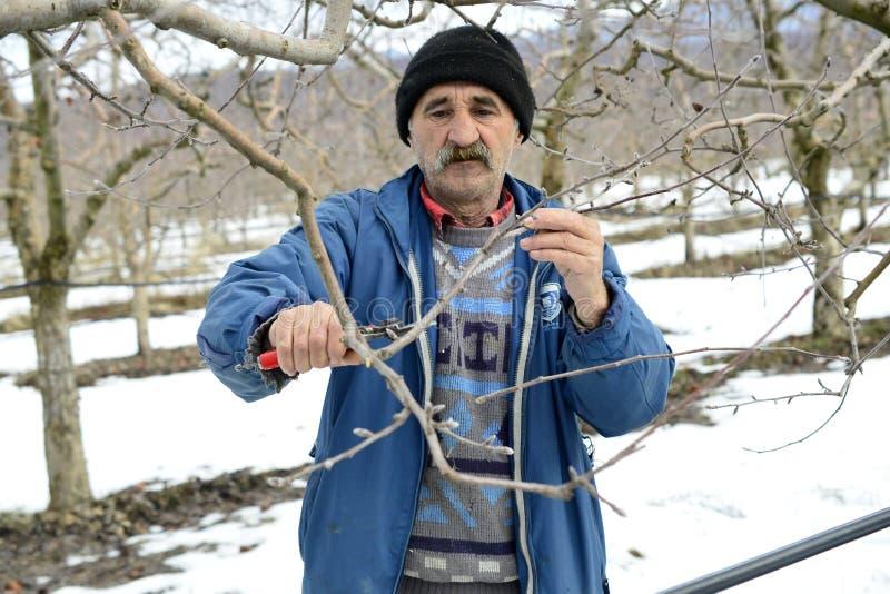 Resen, Macedonia 3 FEBBRAIO 2019 - di melo della potatura dell'agricoltore in frutteto in Resen, Prespa, Macedonia Prespa è bene fotografie stock
