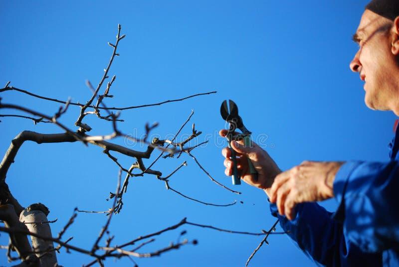 Resen, Macedonia MASZERUJE 16, 2019 - Średniorolna przycina jabłoń w sadzie w Resen, Prespa, Macedonia Prespa jest słynnym region fotografia royalty free
