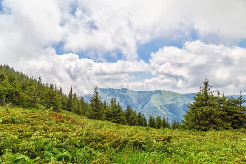 Reserva Chuprene de la biosfera y pico Midzhur fotos de archivo