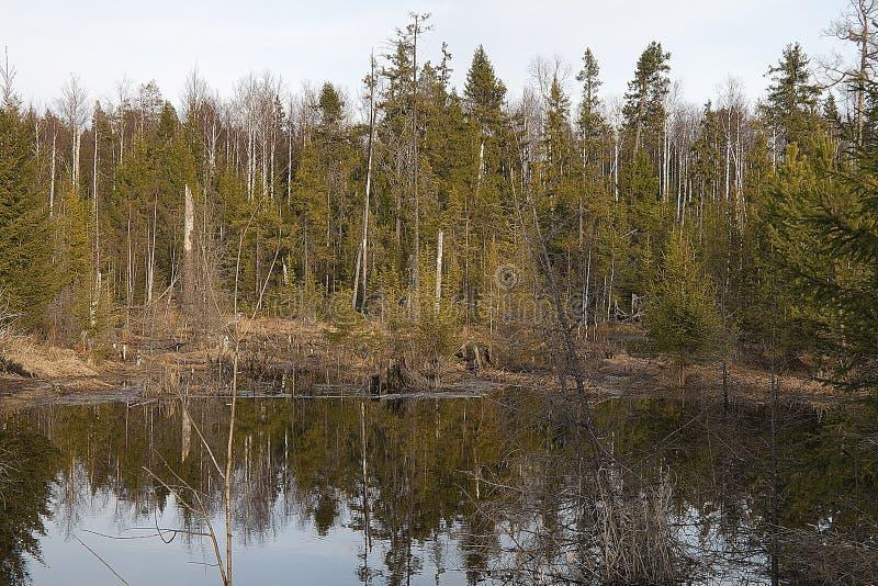 Reserva da biosfera da natureza do estado de Visimsky imagens de stock