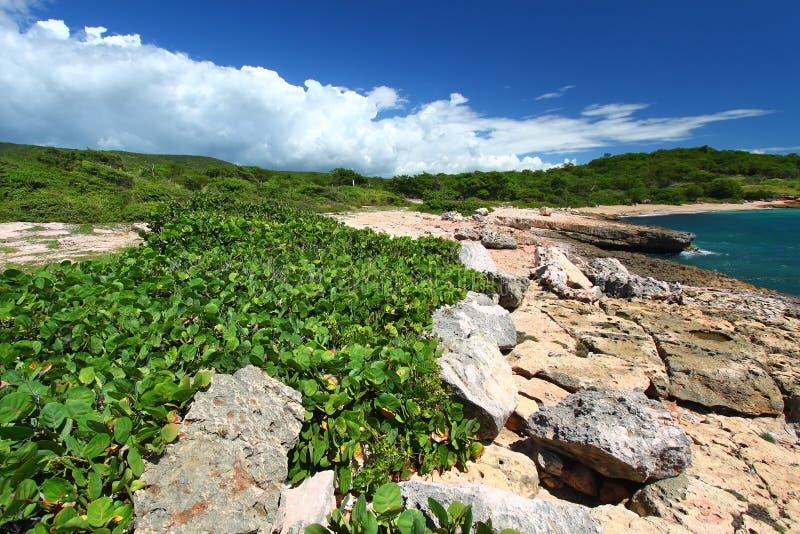 Reserva de Guanica - Puerto Rico fotos de archivo