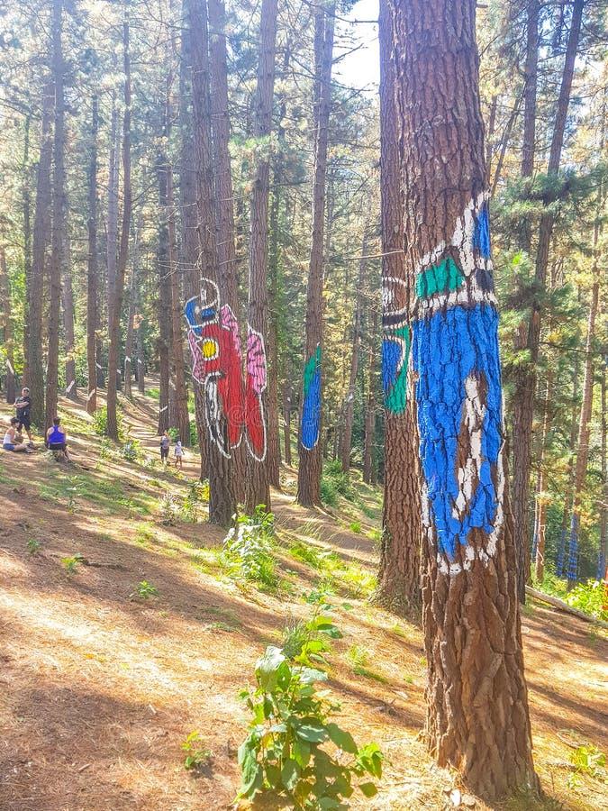 Reserva de la biosfera de Urdaibai, Bizkaia, Espa?a; 2018-04-16: Troncos del pino pintado en el EL Bosque de Oma imágenes de archivo libres de regalías