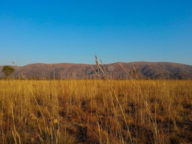 Reserva de naturaleza de Loskop foto de archivo libre de regalías