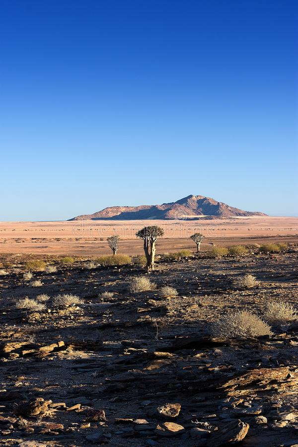 Reserva de naturaleza de Naukluft, desierto de Namib, Namibia foto de archivo