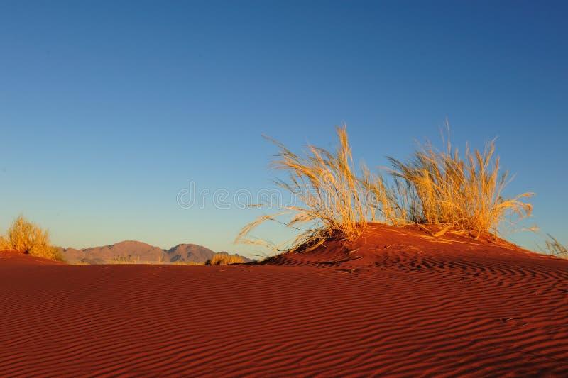 Reserva de naturaleza del rand de Namib (Namibia) imagen de archivo libre de regalías