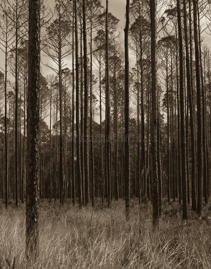 Reserva de Okefenokee después del fuego imagenes de archivo