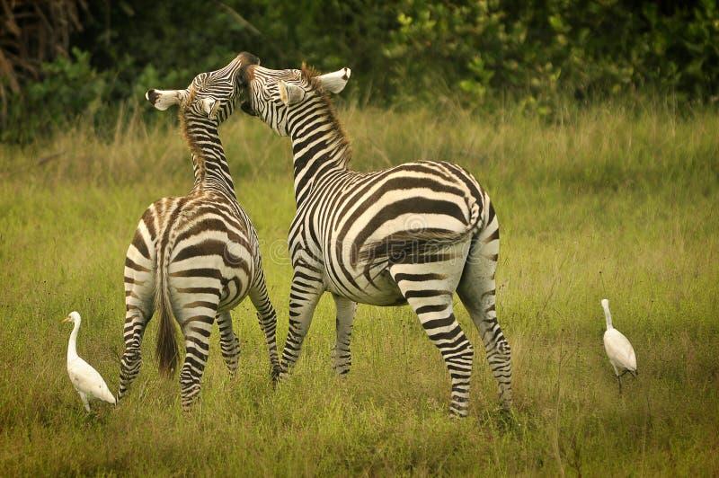 Reserva dos animais selvagens do console de Calauit imagens de stock royalty free