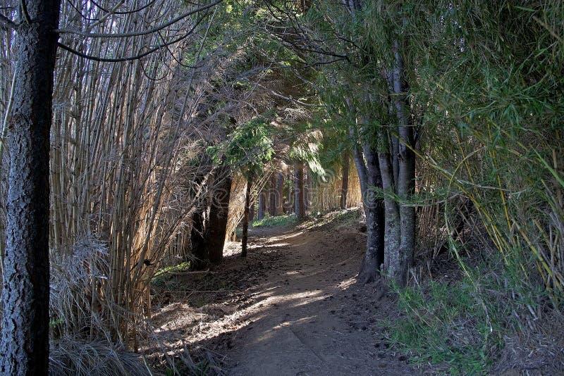 Reserva nacional de Coyhaique, Chile imagen de archivo libre de regalías