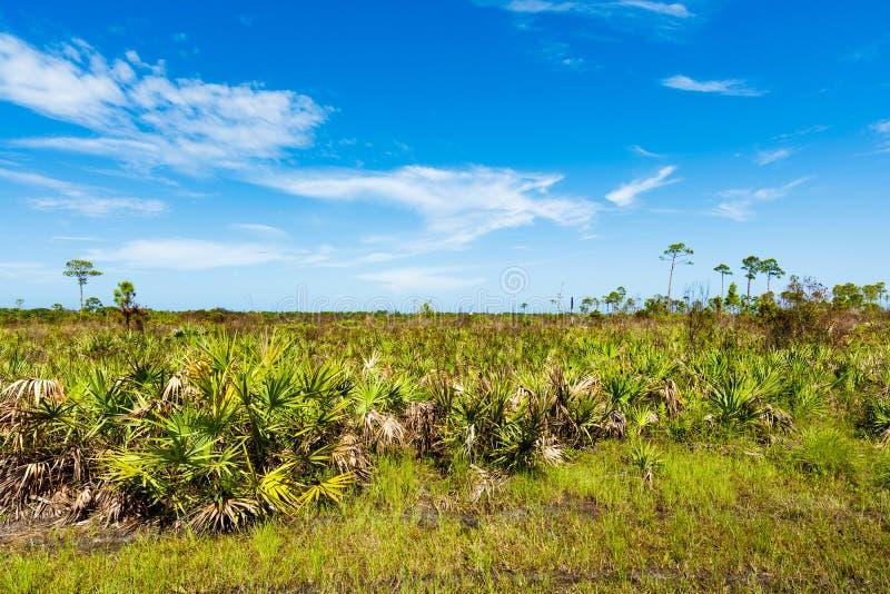 Reserva natural de la Florida imagen de archivo libre de regalías