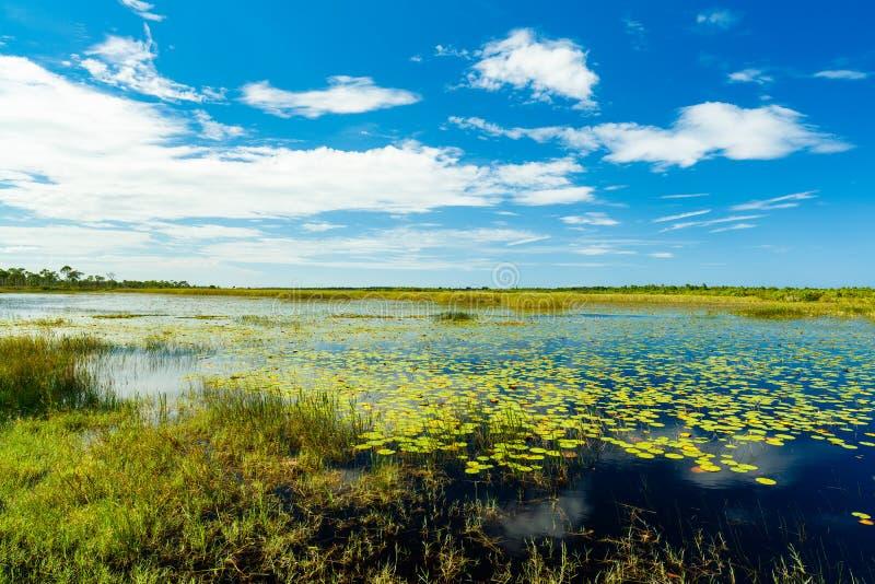 Reserva natural de la Florida foto de archivo