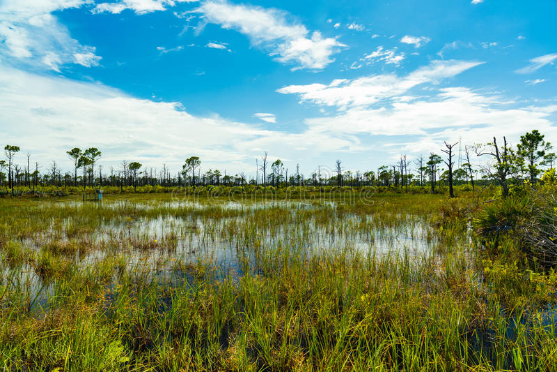 Reserva natural de la Florida fotografía de archivo