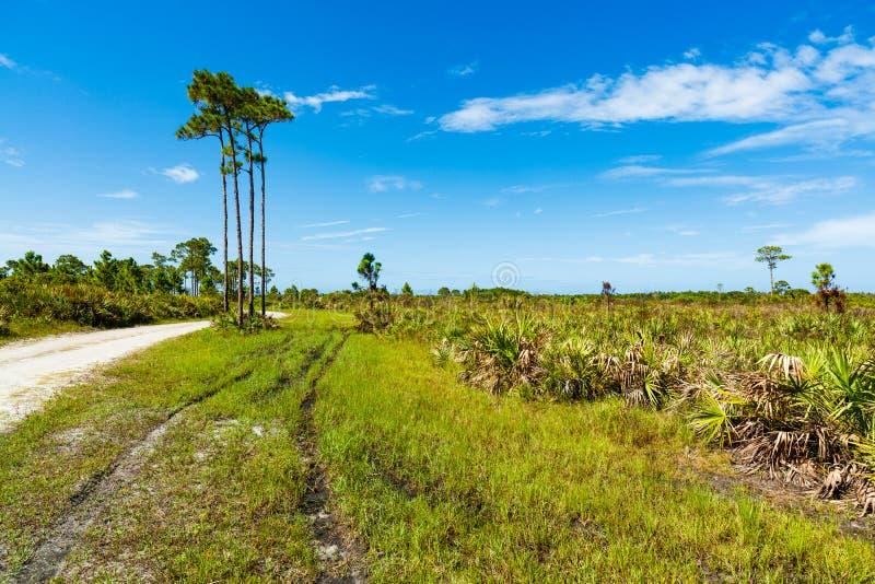 Reserva natural de la Florida fotos de archivo