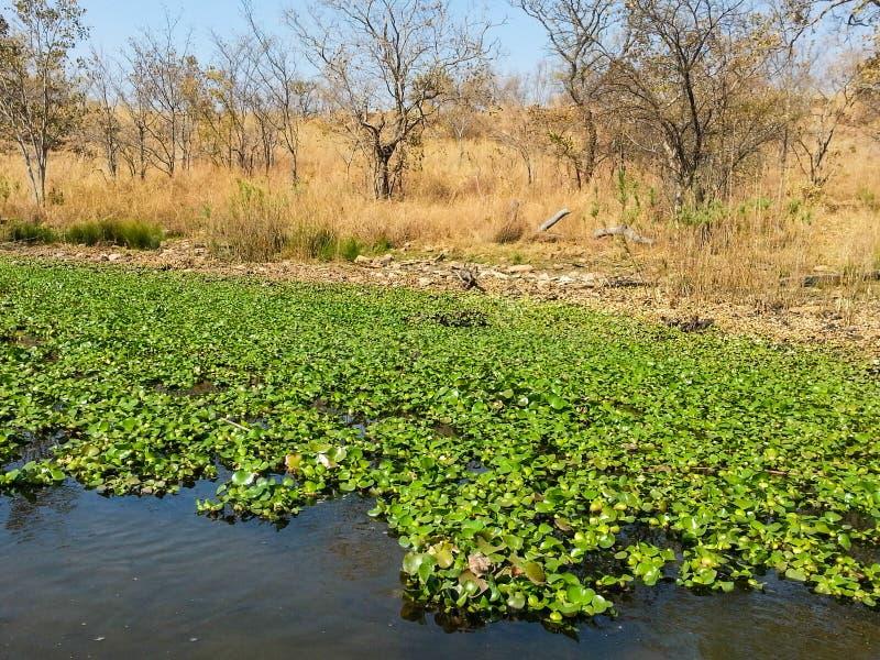 Reserva natural de Loskop fotos de stock