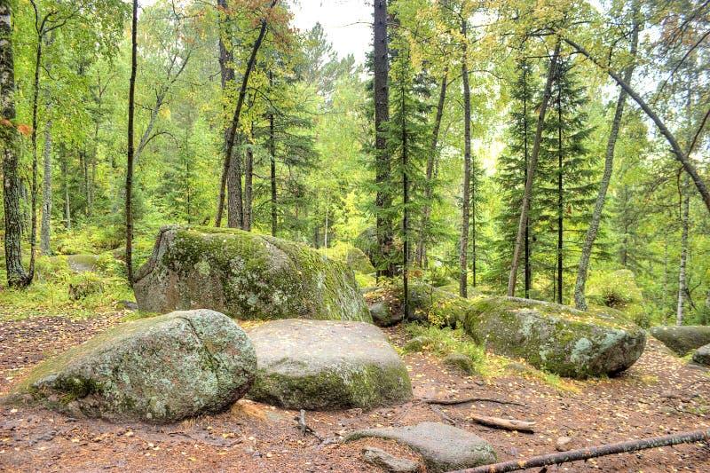 Reserva natural do estado fotografia de stock