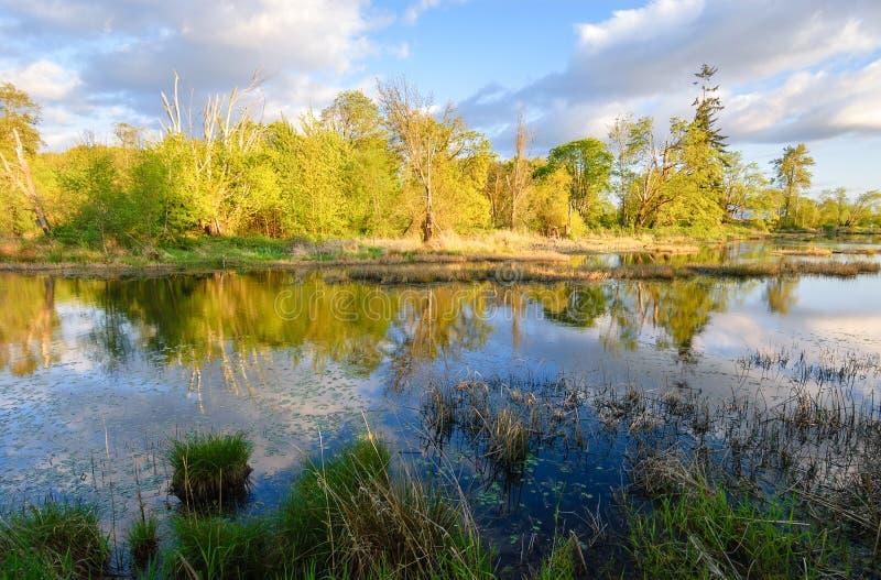 Reserva natural do nacional de Nisqually fotos de stock