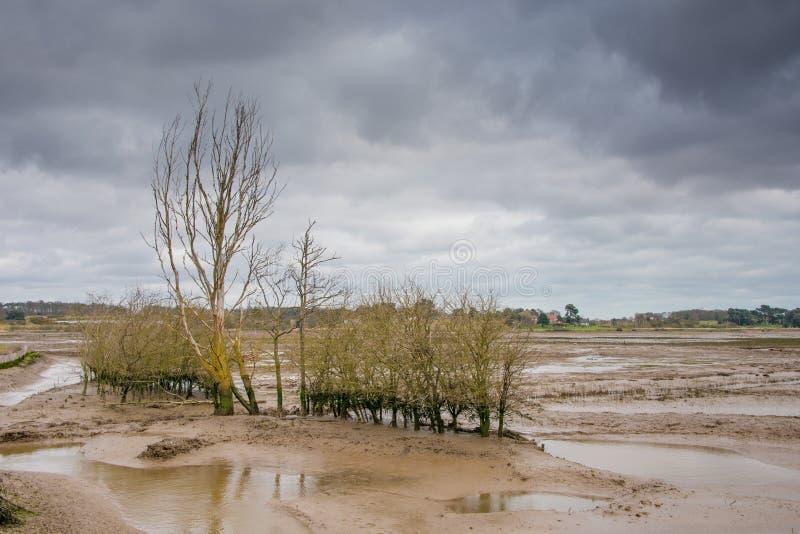 Reserva natural Mudflats imagem de stock
