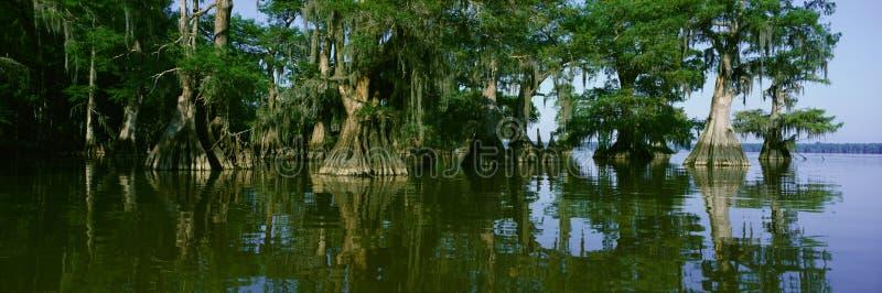 Reserva natural no parque estadual de Fausse Pointe do lago, Louisiana fotografia de stock royalty free