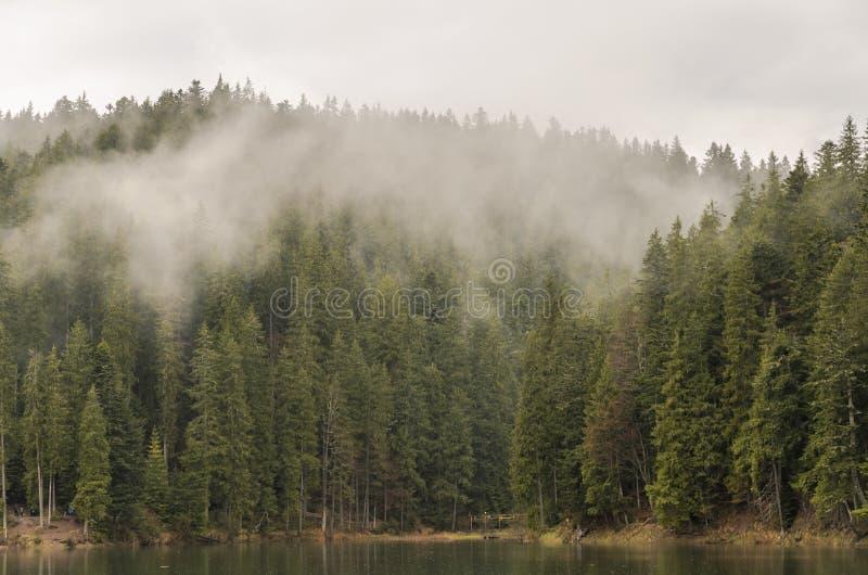 Reserva Synevyr nos Carpathians, um dia chuvoso do lago mountain com as nuvens nas ?rvores fotografia de stock