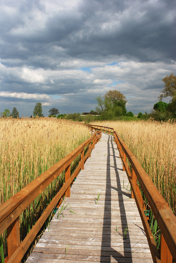 The Reservation Path. The wooden path in reservation over dying lake Zuvintas, Lithuania royalty free stock photography