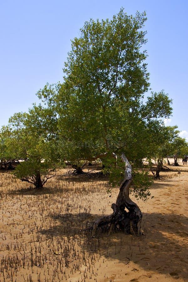 Reserve of lokobe