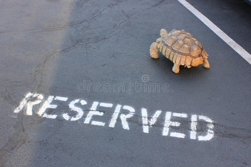 Download Reserved Parking For Herman Stock Photo - Image of reserved, reptile: 27581600