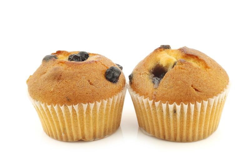 Reshly baked blueberry muffins stock photography