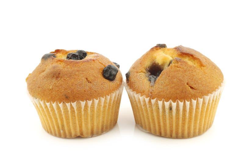 Reshly cozeu muffin de blueberry fotografia de stock