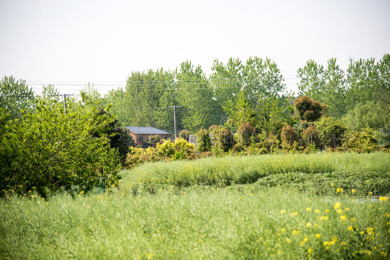 Residence and Farmland royalty free stock image