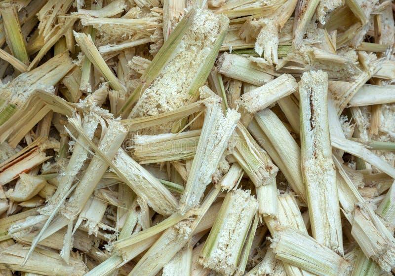 Residu van suikerriet stock fotografie