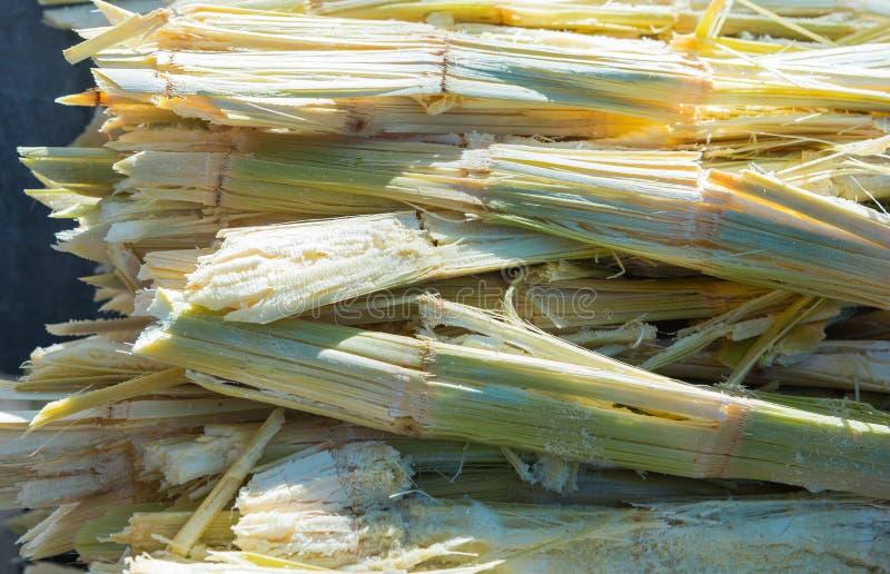 Residu van suikerriet royalty-vrije stock afbeelding