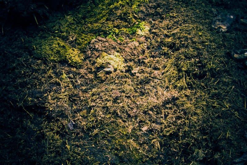 Residu verse koe shit op het gras stock afbeeldingen