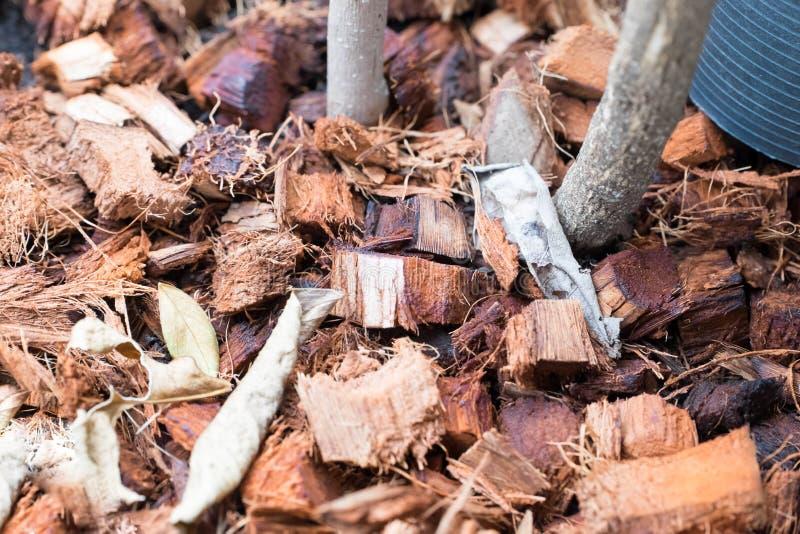 Residuo della noce di cocco immagine stock