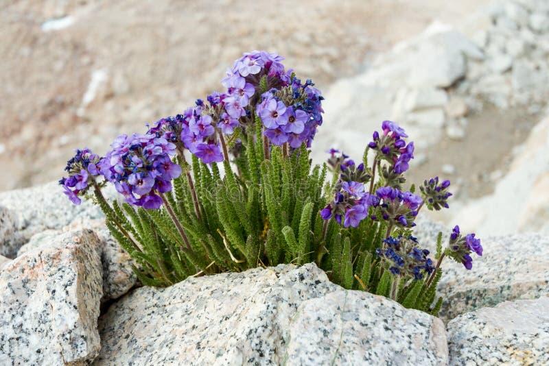 Resilienza - fiori fotografie stock libere da diritti