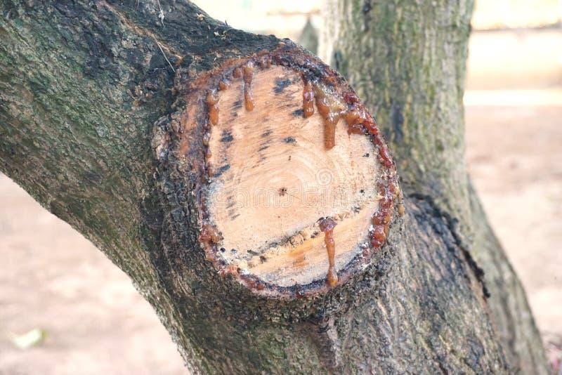 Resina del árbol imagenes de archivo