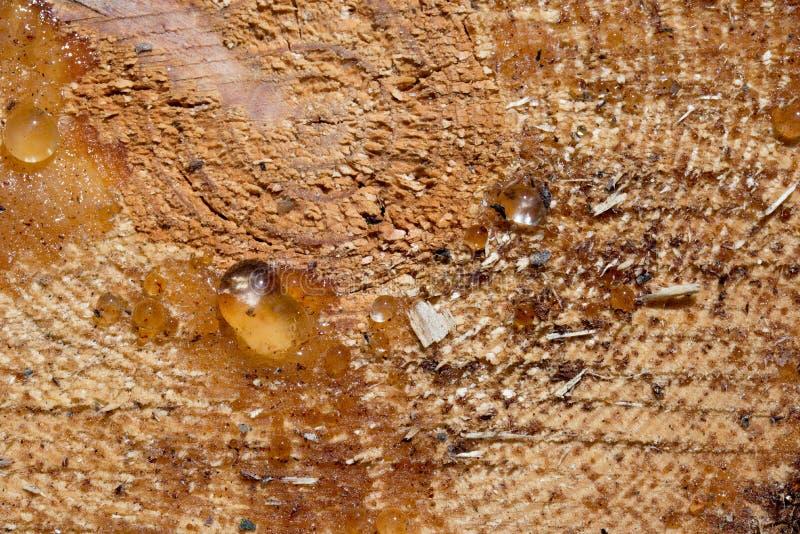 Resina no pinheiro cortado fotografia de stock royalty free