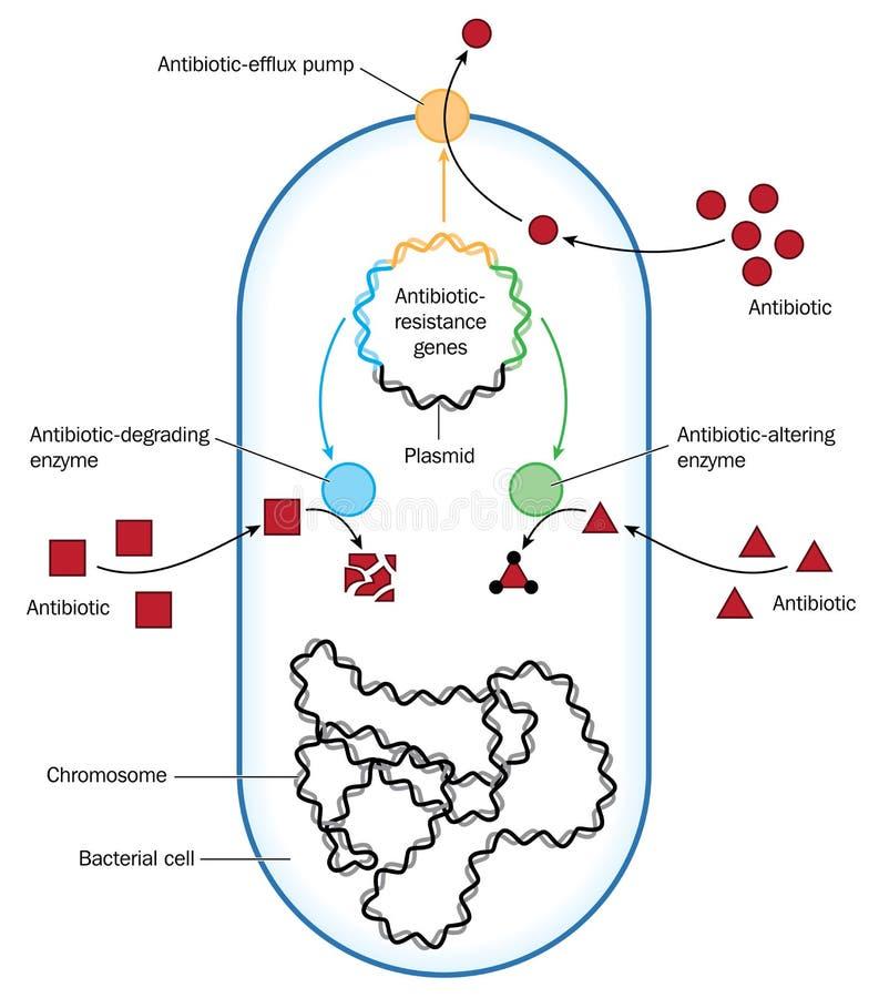 Resistência antibiótica ilustração royalty free