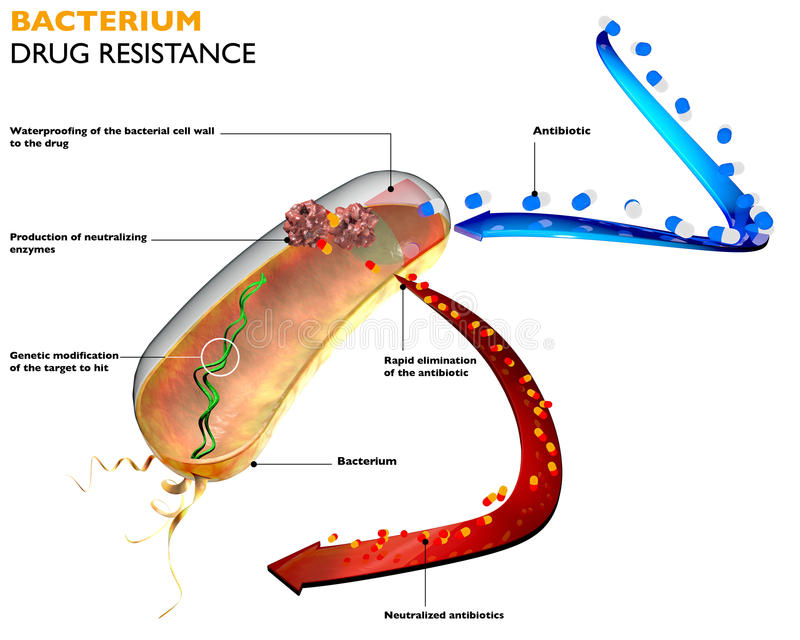 Resistance of bacteria to antibiotics vector illustration