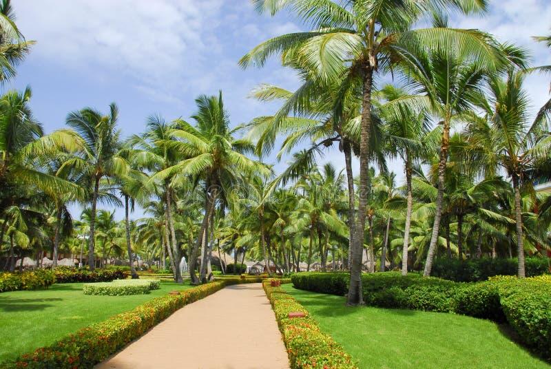 Resort garden royalty free stock photo
