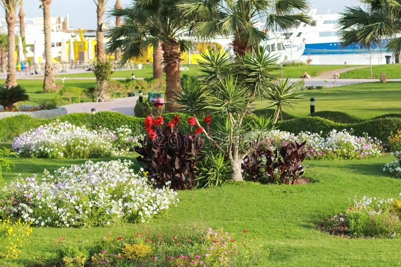 Resort park area. Palma on whom accurate green lawn summer flowers are planted by separate groups. stock photo