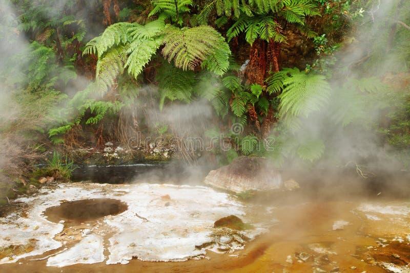 Resorte caliente, Nueva Zelandia imagen de archivo