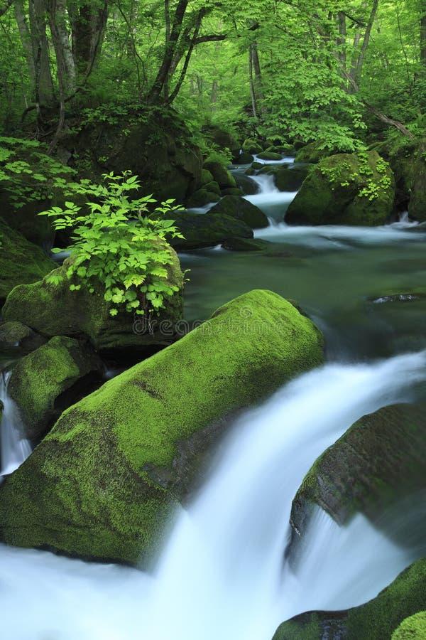 Resorte de agua en bosque foto de archivo