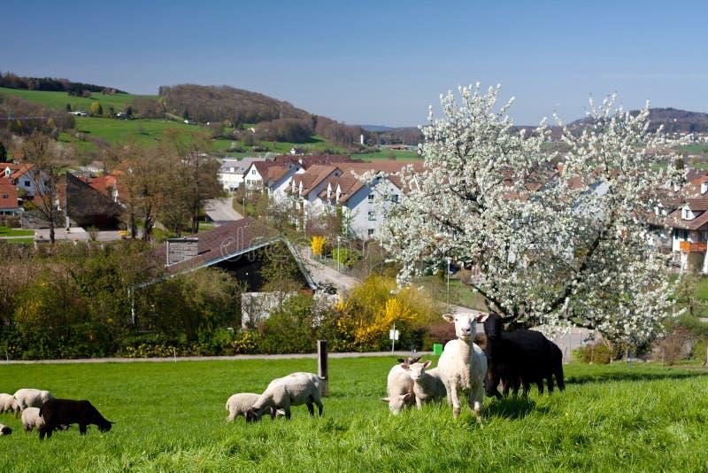 Resorte en aldea suiza fotos de archivo libres de regalías