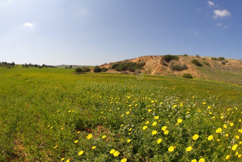 Resorte en desierto. Una hierba y flores imagen de archivo